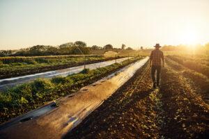 diferencias entre organico y ecologico